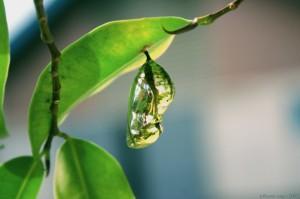 Metamorfosis: oruga, crisalida, mariposa