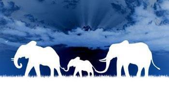 Elefantes blancos