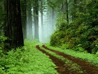 Vereda bosque