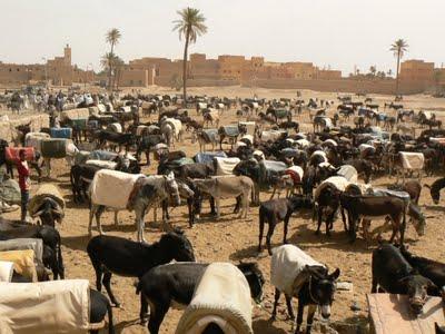 Mercado burros