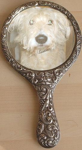 Perro espejo