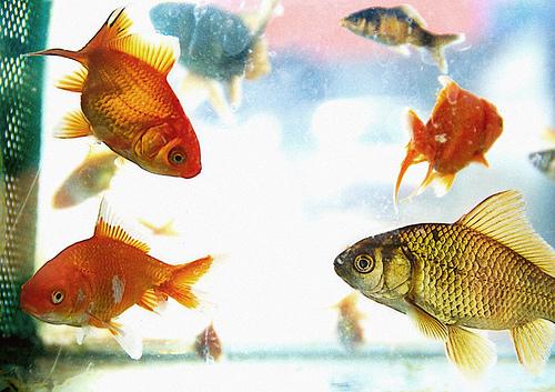 Por la boca muere el pez – ConcurSlow Microrrelatos