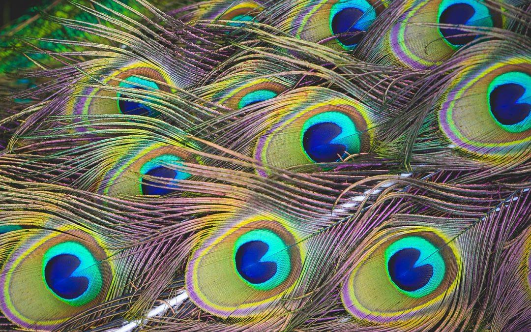 Orgullo, cuento de Rumi sobre un pavo real