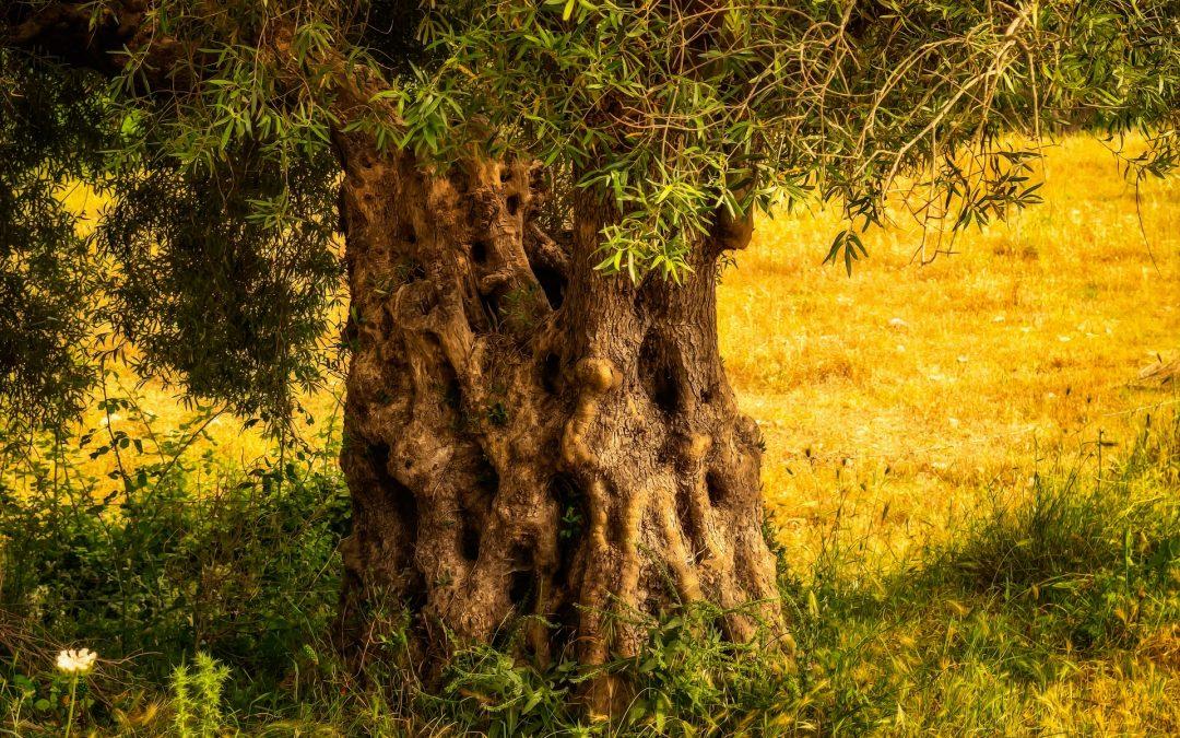 El árbol de los problemas, cuento bello sobre un carpintero