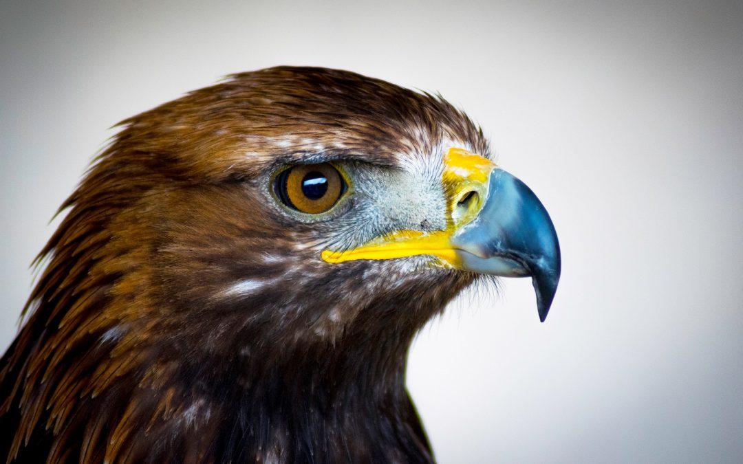 Águila soy, cuento sobre el crecimiento personal